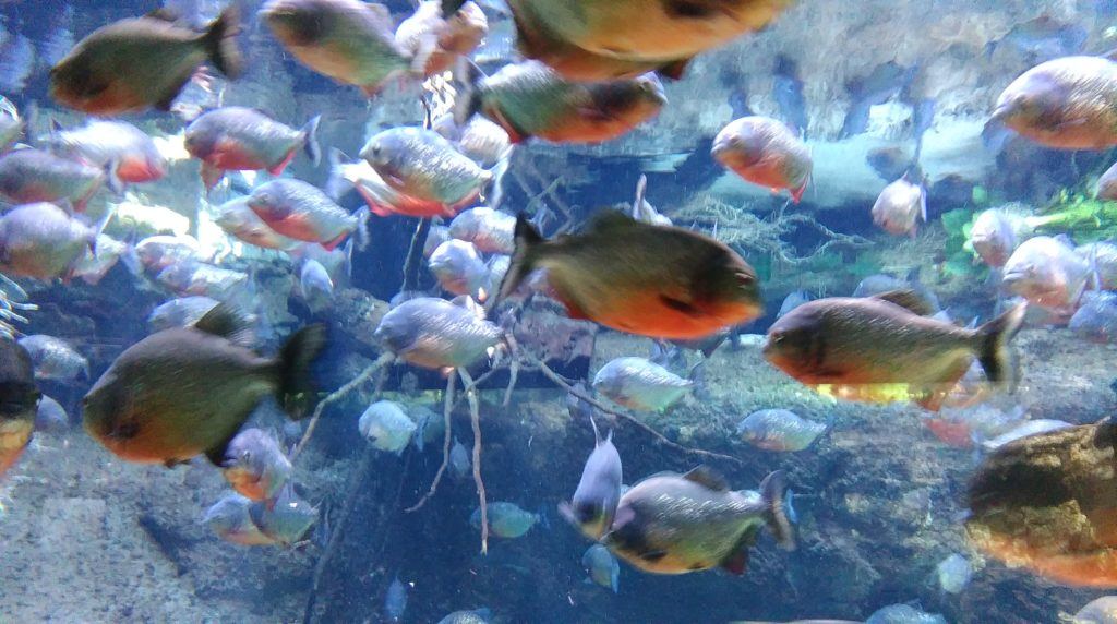 DBP_fisk_2