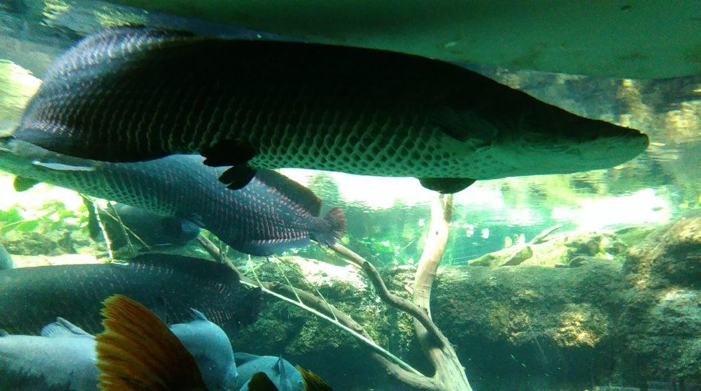 DBP_fisk_3